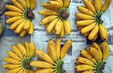 香蕉是老挝向中国出口的主要产品之一