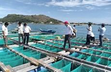 李山岛试点展开海胆养殖模式