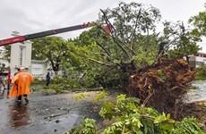 第五号台风今早登陆越南导致1人死亡多人受伤