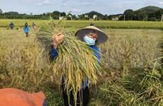 越南提出至2030年设定17个可持续发展目标