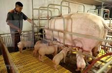 《越南2021-2030年阶段和远期展望至2045年的养殖业发展战略》获批