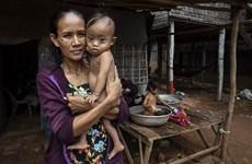 UNDP:新冠肺炎大流行可能使柬埔寨贫困发生率和失业率翻一番