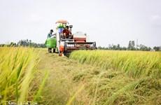 越南后江省将实现农业可持续发展与应对气候变化相结合