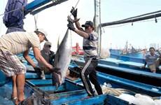 越南金枪鱼出口欧洲的大门敞开