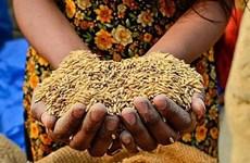 世界粮食日:FAO承诺继续援助越南实施2030年可持续发展议程