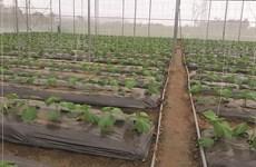 永福省着重促进高科技农业可持续发展