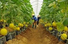 平阳省打造农业产品销售联动链
