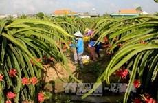隆安省农产品生产链初步见效