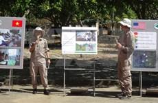 越南和平之树组织对越南各项活动起到积极的作用