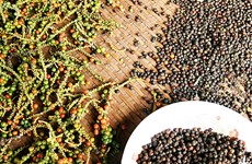 越南胡椒出口呈现积极f复苏迹象