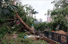第九号台风给越南各地造成严重的人员和财产损失