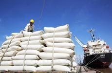 EVFTA助力推动越南大米进军欧盟市场