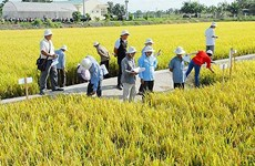 永隆省协助企业加大对农业与农村领域的投资力度