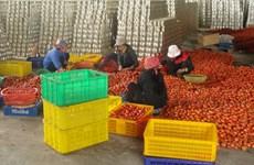 隆安省着重开发优势农产品