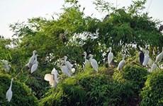 """海阳省的鹭鸶岛——越南北部""""独一无二""""的旅游景点"""