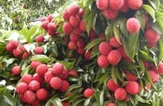 海阳省注重打造农业产品品牌  努力扩大主要农产品出口市场