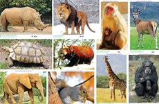 东盟携手合作 努力保护野生动物