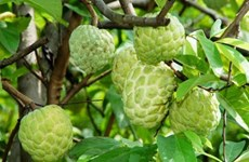 永福省全力推动农产品贸易促进活动取得实效