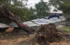 第12号台风致2人死亡 多地遭受财产损失