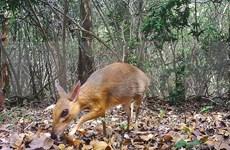 越南与东盟配合遏制生物多样性的丧失