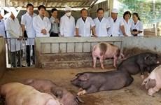 越南有机农产品销往全球180个国家