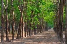 越南力争实现2030年森林覆盖率达42-43%下的目标