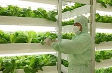 越南着力推动高科技农业强劲发展