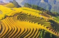 越南旅游:令人沉醉的木江界梯田