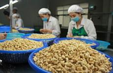 越南保持着世界第一大腰果加工与出口国的地位