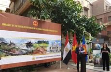 为加大越南-埃及文化交流搭建桥梁