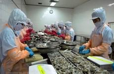 金瓯省虾类出口在后疫情时期迅速恢复
