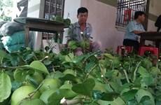 槟椥省农民注重建设和完善农产品价值链