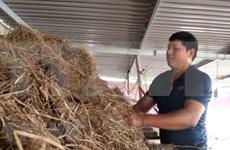 洪灾退后广平省农民一直努力恢复生产