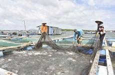 巴地头顿省发展水产养殖模式