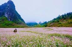 """河江省努力打造""""富有特色、安全、善友""""的旅游目的地"""
