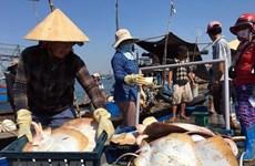 越南鱼业努力克服困难 完成全年既定目标