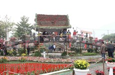越南北部最大花卉种植区的春季花卉节芬芳开幕