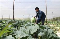 林同省在春节期间向市场提供近80万吨蔬菜