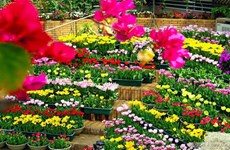 2023年国际花卉节将在广平省举行 投资总额约1.22亿欧元