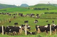畜牧业迎来可持续发展的机会
