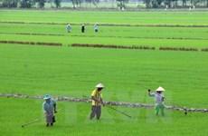 海水倒灌威胁九龙江三角洲地区100万公顷的水稻