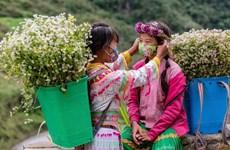 河江省各民族同胞抗击预防Covid-19和实现经济可持续发展的照片集