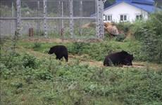 越南持续加大涉野生动物犯罪打击力度