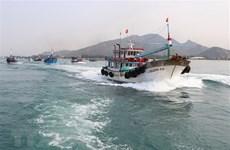 解除IUU黄牌警告:越南努力打击非法捕捞行为