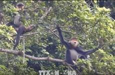共促民生与稀有动物的栖息地和谐发展