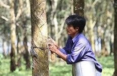 越南橡胶工业集团向市场供应天然橡胶近323600吨