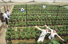林同省的农业旅游
