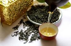 越南太原省将茶叶发展成为主要农产品