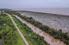 越南着力推动九龙江三角洲可持续发展和适应气候变化