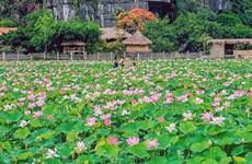 宁平省促进农业与农村旅游发展